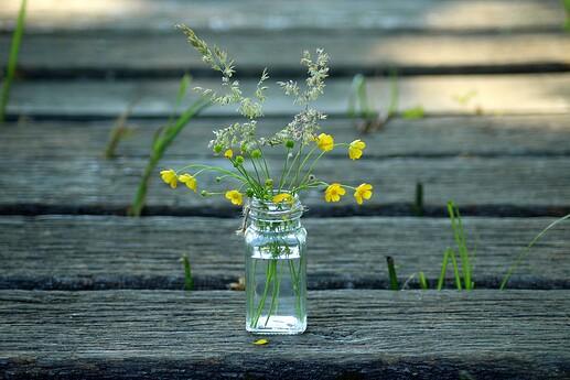 wildflowers-3437245_1920