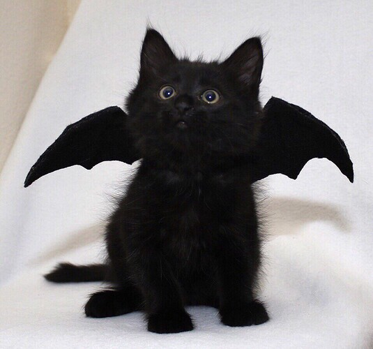 bat-wings-adorable-cute-Favim.com-6493968