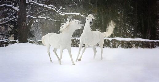 snow-3063835_1920