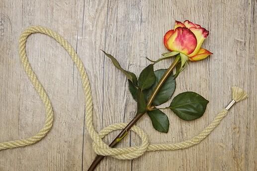 rose-3198625_1920