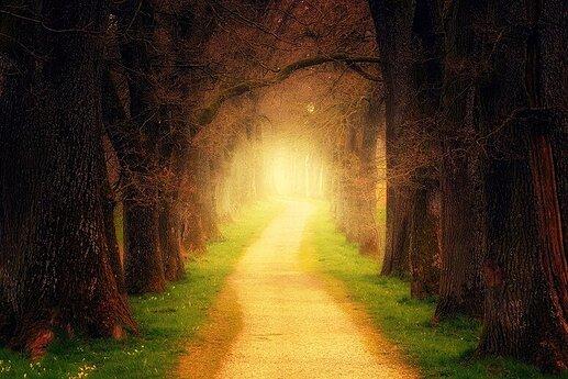 The Path of Choice