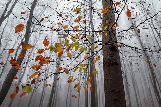 autumn-g972500c67_1920