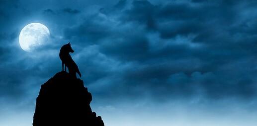 wolf-3603190_1920