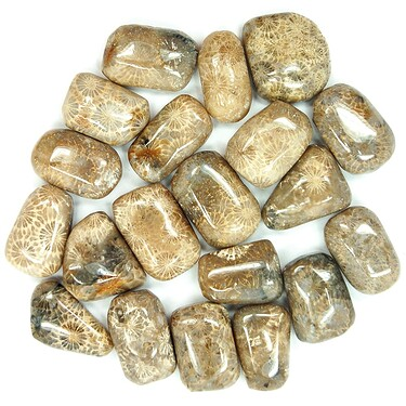 Tumbled-Agatized-Fossil-Coral-01