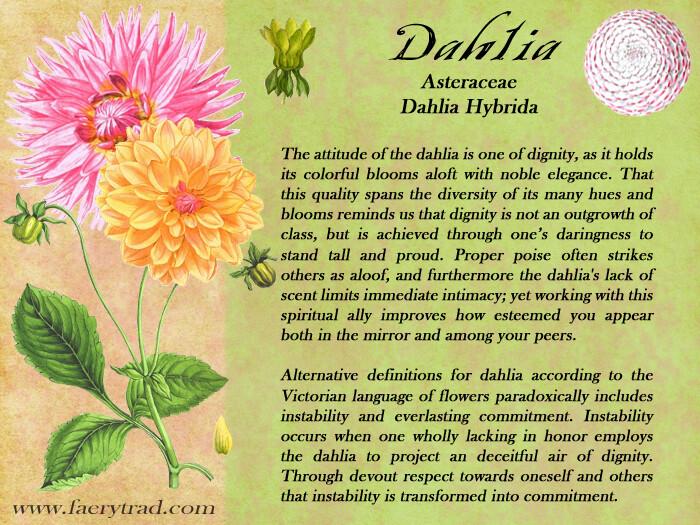 Dahlia Magic